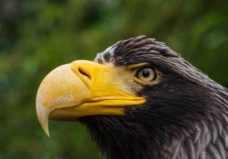 eagle heron nature naturephotography nikon nikond500 nikongermany prairiedog seaeagle tiergarten wildlife wildlifephotography yourshotphotographer zoo zooheidelberg