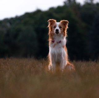bordercollie colliesofinstagram collielovers dogsofinstagram doglover dogphotography