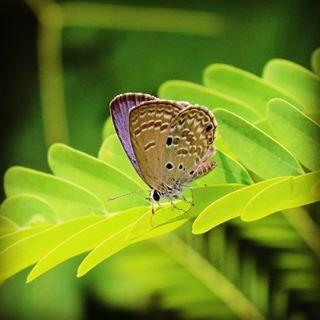aravind_sripathi photo: 1