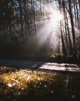 morning woods light lightroom forest magic magiclight spiders zauberlicht sunrise sunset sunrisephotography sunsetphotography sunrays autumn autumnvibes road photography canon glitter