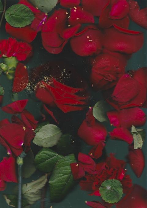Portfolio In Bloom photo: 2
