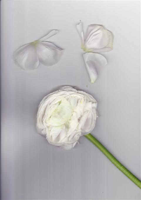 Portfolio In Bloom photo: 1