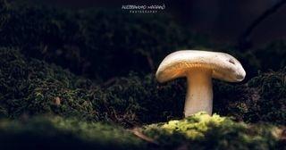 mushrooms lightpainting lightpaintingphotography nikonitalia ledlenser italy