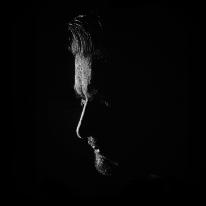 Avatar image of Photographer Marko Grzunov