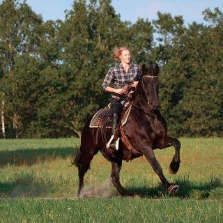 horsephotography horse horsesofinstagram horses equestrian equine instahorse horseriding horselove equestrianlife equinephotography horselover pferd photography dressage pony horselife pferde pferdefotografie horseofinstagram