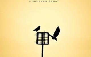 shubham.sahay photo: 0