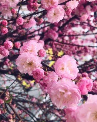 smellisamazing springflowers bloom warsawbeauty naturephotography walking warsaw
