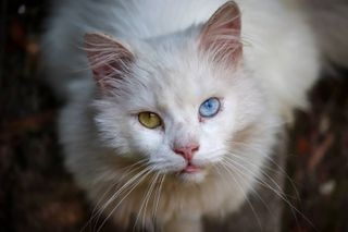 photooftheday catsofinstagram photographers photograph photographylovers photo photographer photographie photos photography photoshoot catstagram catlover cats catlife cat canonusa canon canonphotography canon animal animals beauty beautiful colors contrast naturelover nature