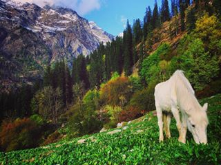 nomad_nikhil photo: 1