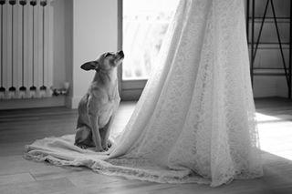 wedding_giorgiobaruffi photo: 0