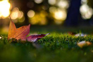 amazing angles autumn beautiful doubletap earth goodweather nature naturelove nature_wizards perfect photography photooftheday sunshine visualambassadors
