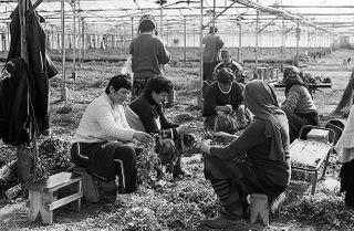 georgia greenhouse herbalists