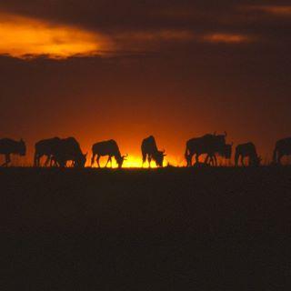 wildlifedreamspg photo: 1