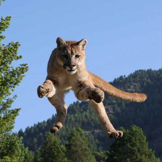 wildlifedreamspg photo: 2