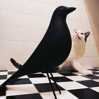 adoptnotbuy bird cat design eames friend icon iconic insomnia insomniac kitty newfriend night nightbath vectra