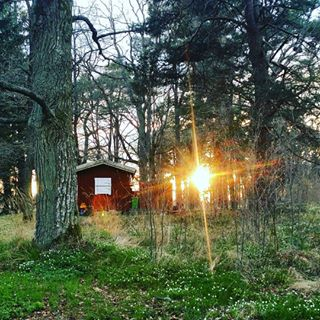 afternoon beautiful flowers forest loveflowers nature naturelovers naturephotography shapes spring stockholm sunlight sunset walk