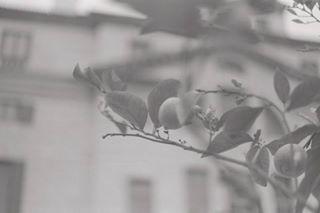 alberttripolt photo: 1