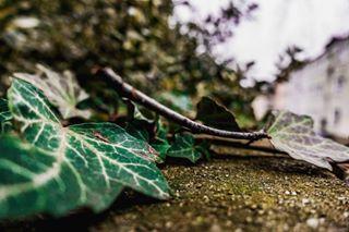 slavalicious_photography photo: 2