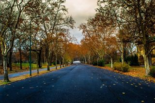 alone autumn colorful colors d hungary nature nikon nikonvagyok nobody objective sky street trees varosliget way