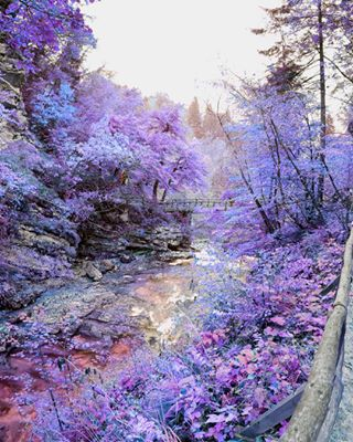 nature photography purple what
