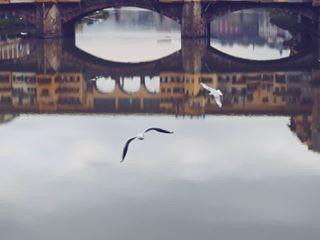 arnoriver florence flying naturalframe overtheriver pontevecchio reflections seagulls streetphotography upsidedown water whatsreal