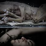 Avatar image of Photographer barbara vandendriessche