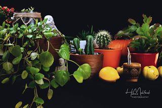 3 art black buddha colors composition fineart green home homedecor homedesign interiordesign limon photography plant plants tee