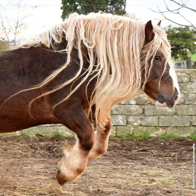 biodiversity caitpr drafthorse equinephotography ig_puglia shooting show stallion