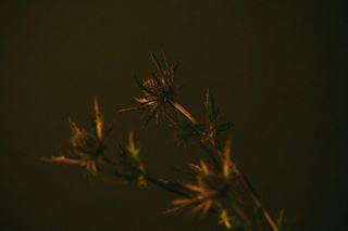 liorabasse photo: 1