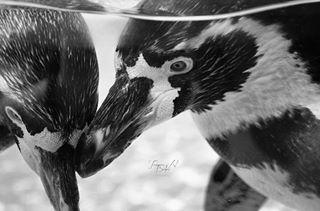 tamaraalbahri photo: 1