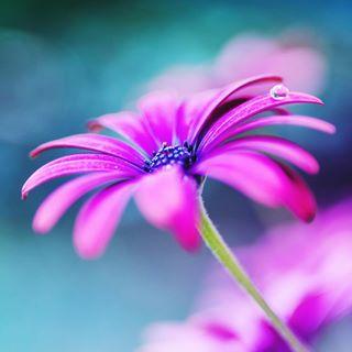 tamaraalbahri photo: 2