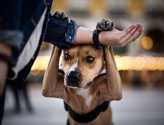 a_bunchofdogs photo: 2