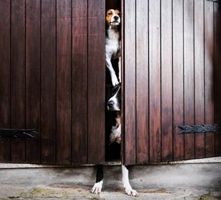 a_bunchofdogs photo: 1