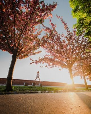 beautifuldestinations blossom budacastle budapest castle cherry cherryblossom explore home homeexplore hungary jump otherpointofview photo photographer photography sunset totharpadsetany travel wideangle