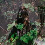 Avatar image of Photographer Julie Jaimond
