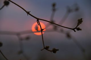 100mm beach bokeh chaszcze cyprus endemicplants juniper melloworange sunset tree