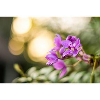 sarah_cornetphotography photo: 2