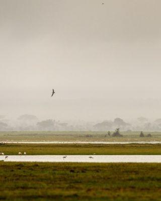 tbt kenya wildlife wildlifephotography