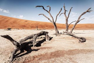 africa awesome_surreal beautifuldestinations beauty canon deadthings desert dryandsalty hothothot namib namibia namibiaroadtrip namibiatravel postcardplaces reservation roadtrippers salty sossuvlei thisisnamibia travelgram travelphotography treegram trees unrealplaces