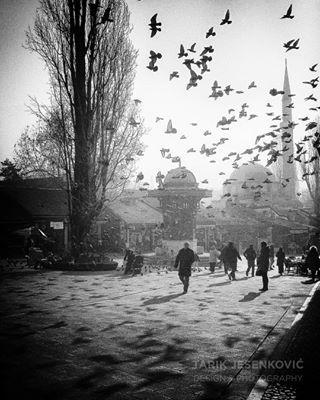 tarikjesenkovic photo: 0
