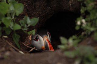 basic_wildlife photo: 0