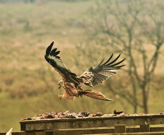 basic_wildlife photo: 1