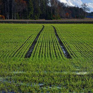autumn nature naturephotography photographer sweden