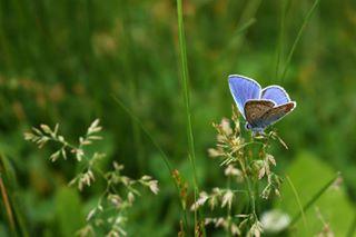 500px foto insect nature nikon nikond5600 nikonphotography nikonua nikonukraine professionalfotographer profoto бабочка природа украина фото