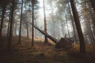 Portfolio Portfolio photo: 0