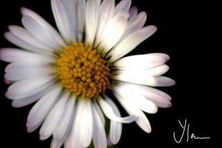 yphotographie_ photo: 0